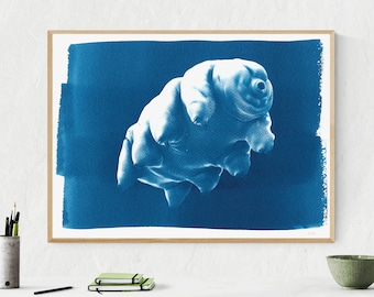 Tardigrade or Water Bear / 50x70cm / Cyanotype on Watercolor Paper / Limited Edition