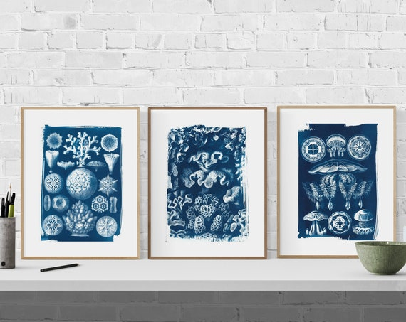 Ernst Haeckel Book, Set of 3 Handmade Cyanotype on Watercolor Paper. Limited Edition