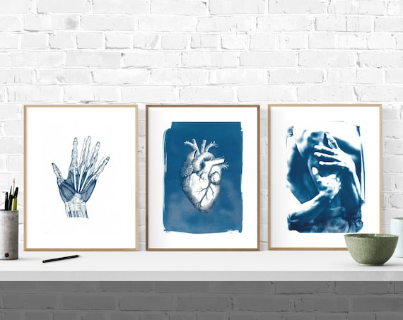 Set of 3 Anatomical Cyanotype Prints. Limited Edition