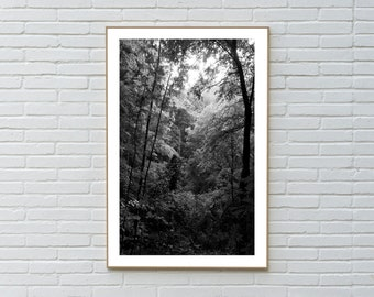 Large Black and White Limited Edition Photograph of Late Afternoon Forest Light, Classy Landscape, European Forest, Countryside, Afternoon