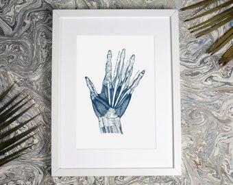 Hand Anatomy Vintage Illustration, Cyanotype Print, Anatomical Art, Medical Art, Hospital Art, Office Decor, Vintage Anatomy, Doctor Gift