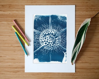 Handmade Cyanotype Print showing a Vintage Microscopic Drawing on Watercolor Paper, Science Gift, Space Art, Boyfriend Gift, Limited Edition