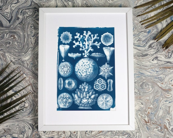 Geometric Coral Drawing by Ernst Haeckel, Cyanotype Print, Nautical Decor, Ocean Print, Sea Coral, Geometric Art, Botanical Print, Beach Art