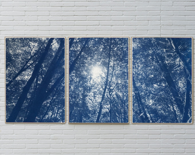 Looking Up at The Trees / Cyanotype Print on Watercolor Paper / 2021