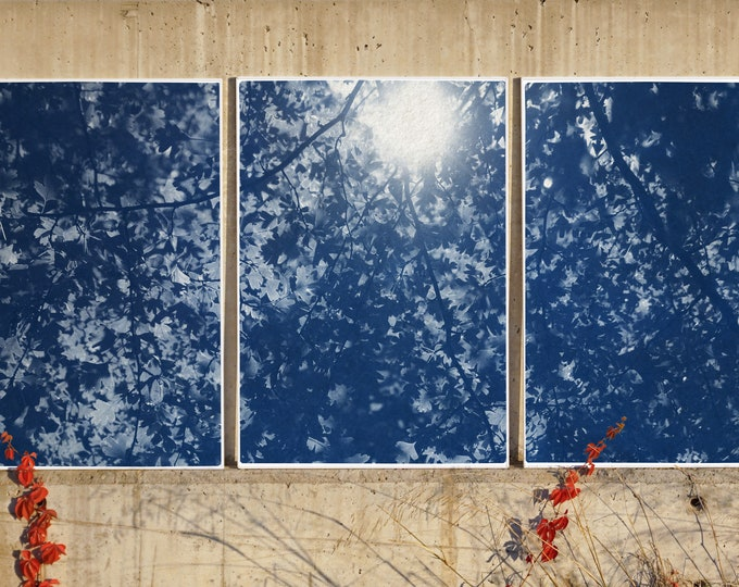 Sunlight Trough Forest Branches / Cyanotype Print on Watercolor Paper / 2021