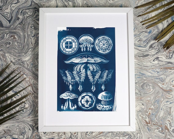 Jellyfish Anatomical Drawing Ernst Haeckel, Beach Decor, Anatomical Art, Medusa, Dorm Wall Art, Nautical Decor, Nature Inspired Art, Sealife