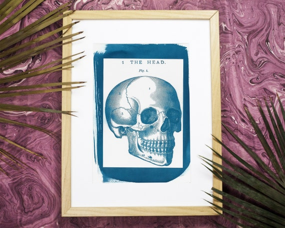 Human Skull Vintage Illustration, A4 size (Limited Edition)