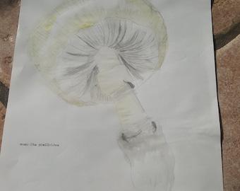 Amnita phalloides watercolor