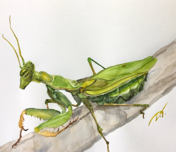 Praying Mantis Original Watercolor Painting 5 x 7 Inches