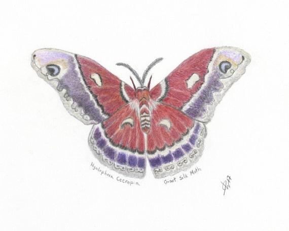 Mariposa Arte Impresión Impresión De La Mariposa Del Lápiz De Etsy