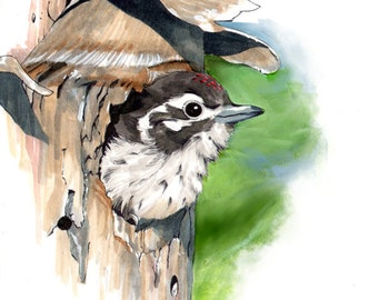Woodpecker Painting // Acrylic Print // Acrylic Painting // boyfriend gift // coworker gift // best friend gift