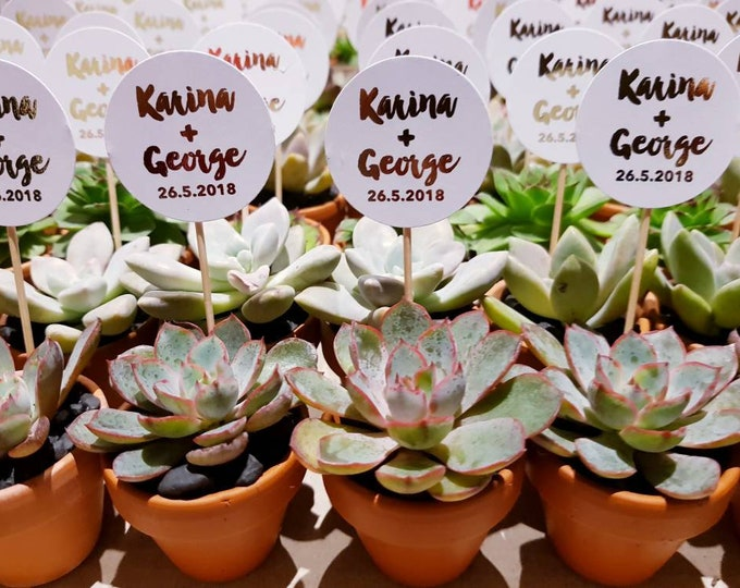 Quality Succulents For Weddings Bridal Showers Baby Showers