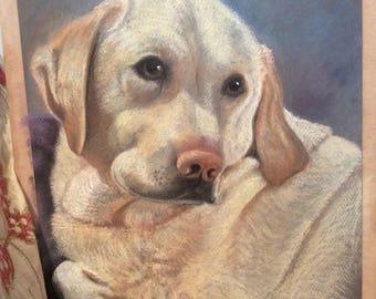 Animal Portraits commissioned.