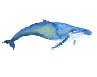 Whale Print - Watercolour Painting