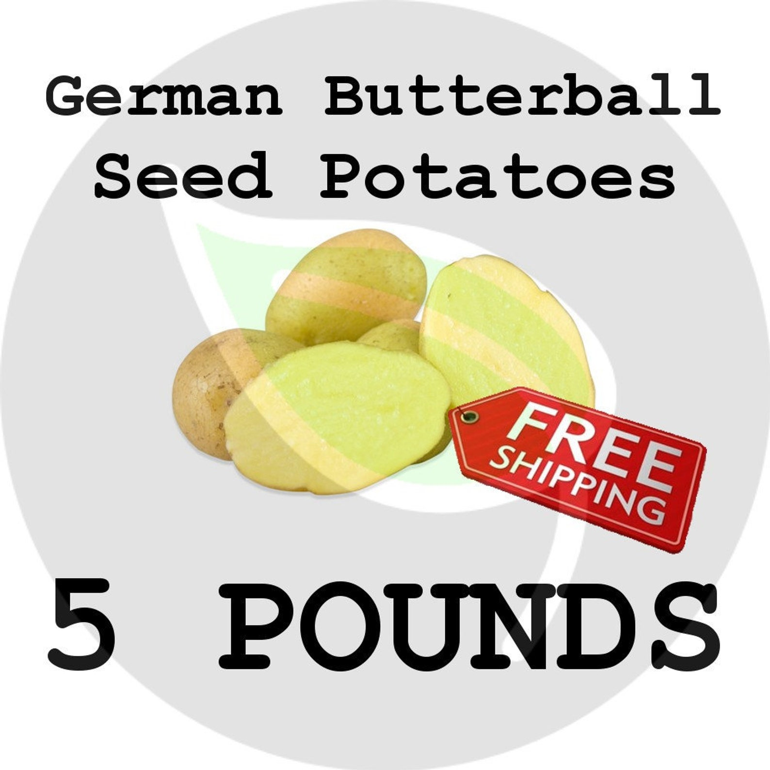5-15 Lbs - German Butterball Seed Potatoes - 2019 Spring CERTIFIED SEED POTATO, Garden Planting! Non-Gmo Heirloom Tuber Spud