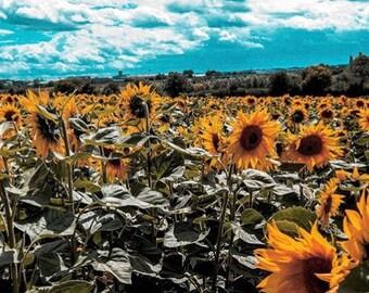 Hitchin fields 17'