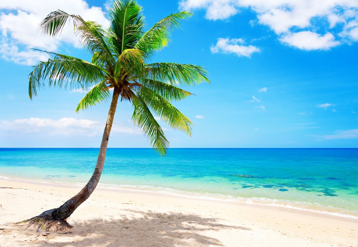 mural wallpaper canvas DIY ZZ0065  Coconut Tree Lonely on The image 0