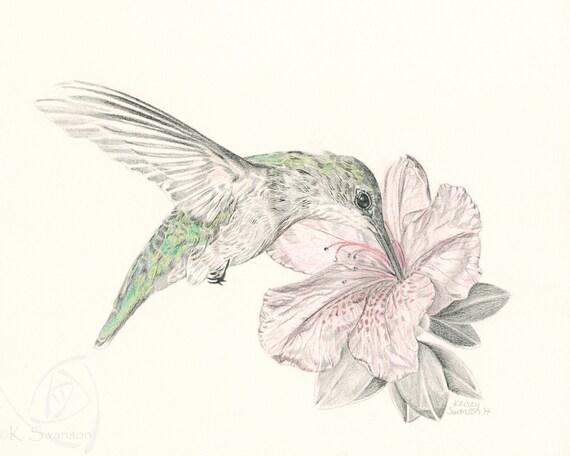 Colibrí/Ruby impresión/garganta/flor/fauna silvestre/poster de | Etsy