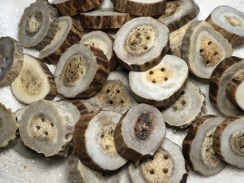 Antler Buttons, Bone Buttons, Medium-Large Buttons, Natural