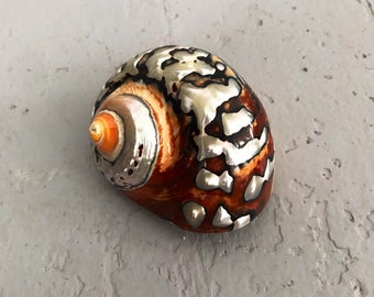 """polished Sarmaticus shell - hermit crab changing shell - opening widths 1 1/4"""" - 2 3/8"""""""