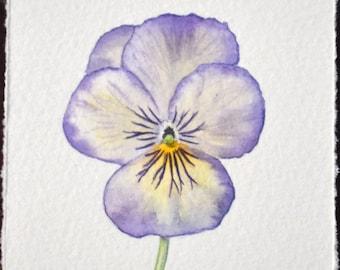 Watercolour Viola - Original painting