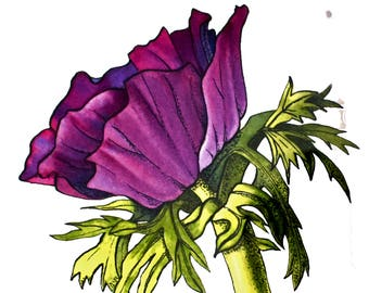 Original watercolour and ink painting- Purple Anemone