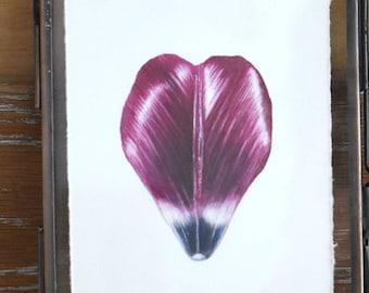 Watercolour tulip petal - Original painting