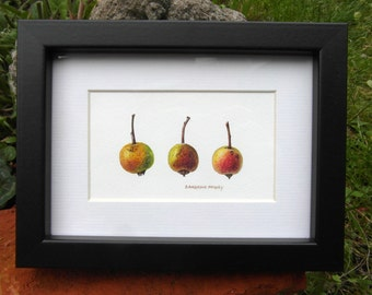 Original botanical watercolour - Little Crab Apples