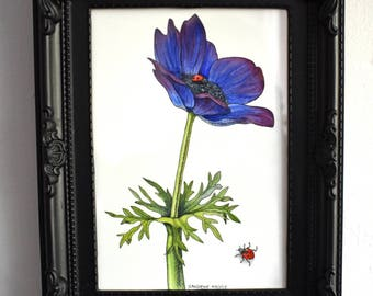 Original watercolour and ink painting- Anemone with two ladybirds