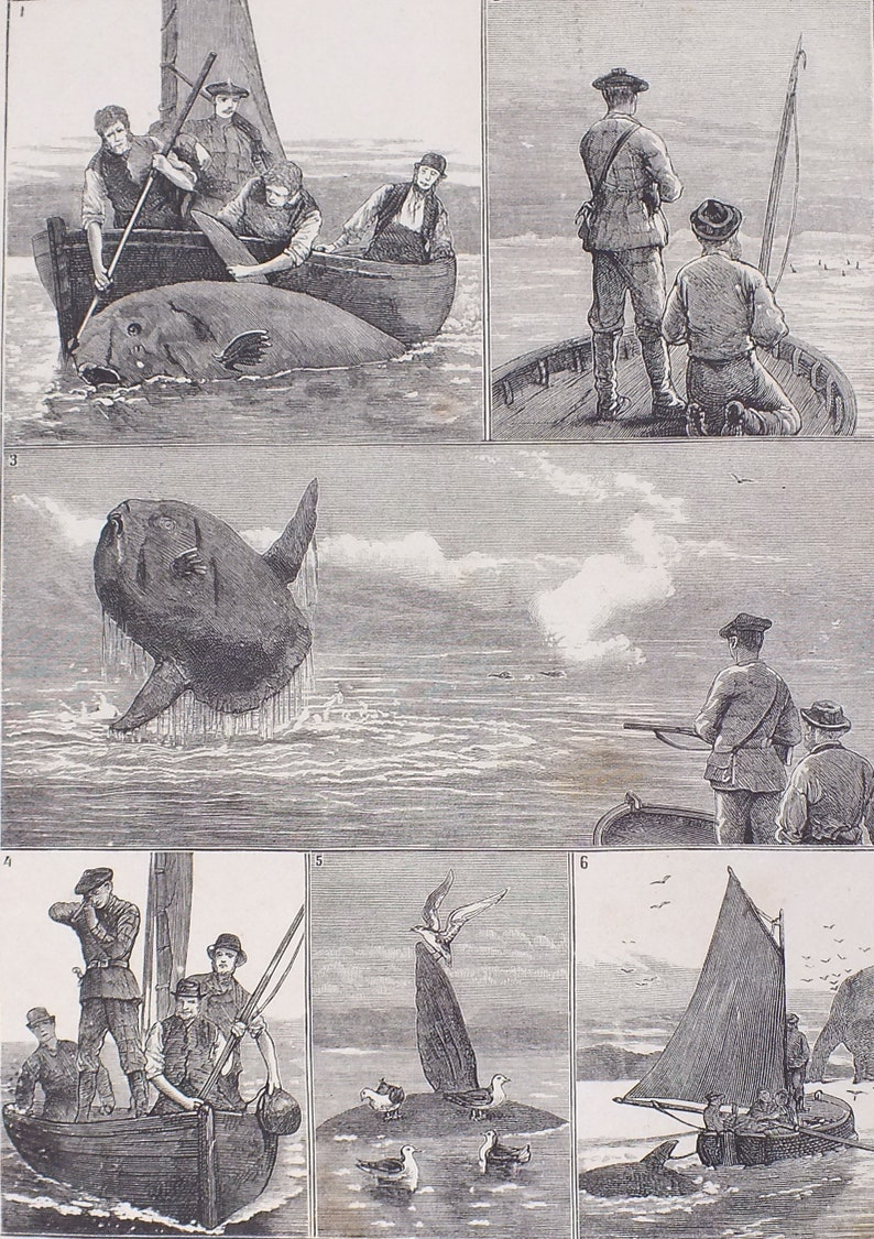 Two Original Antique 1883 Art Prints 10 Pictures Fishing Vessels Fishers Fish Boats Sailboats Engraving Hunting Fishing Antique Art Prints