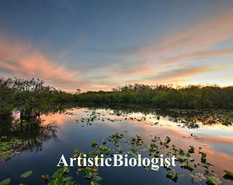 Anhinga Dawn Fine Art Print, South Florida
