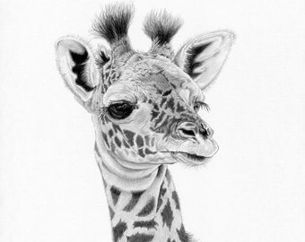 GIRAFFE Calf (4) Limited Edition art drawing print signed by UK artist