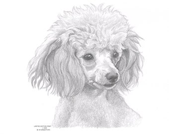 Toy poodle print | Etsy