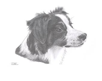 BORDER COLLIE (5) sheepdog dog Limited Edition art drawing print signed by UK artist