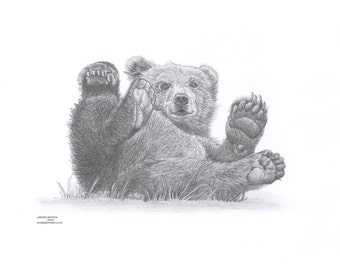BEAR CUB Limited Edition art drawing print signed by UK artist