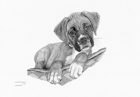 Boxer Puppy 2 Dog Limited Edition Art Drawing Print Signed Etsy