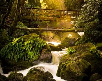Bridge across waterfall in the forest photo print / metal print