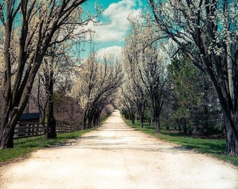 Back road Fine Art Photography Whimsical Woods