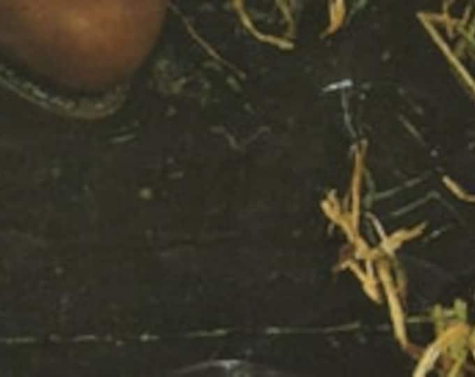 Walking Socks Knitting Pattern PDF, Womens, Mens and Teenagers Thick Hose Socks, Boot Socks , DK . Instant Digital Download