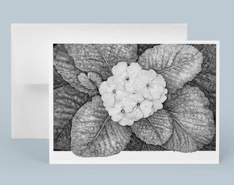 Greeting Card, Primrose Graphite Drawing, Black and White, Flower Note Card, Original Painting, Floral