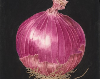 Red Onion Botanical Print  - Botanical Art Watercolor Painting by Sally Jacobs - Kitchen Décor - Vegetable Art - Red Purple