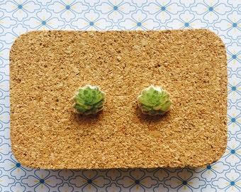 Succulent handmade hypoallergenic stud earrings gift girl plant  free shipping international
