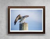 Osprey, Osprey Print, Nature Photography, Bird Wall Art, Minimalist Nature Print, Bird Print, Bird Lover Gift, Animal Print