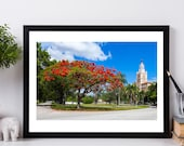 Royal Poinciana, Red, Miami, Biltmore Hotel, Summer Photography, Red Leaves, Summer Decor