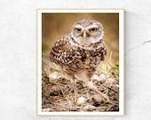 Burrowing Owl, Owl Print, Nature Photography, Bird Wall Art, Minimalist Nature Print, Bird Print, Bird Lover Gift, Animal Print