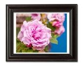 Colorful Rose Photograph, Flower Photography, Botanical Art Print, Shabby Chic Decor, Nature Photography