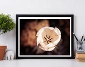 Tulip, Flower Photography, Tulip Photo, Tulip Wall Art, Tulip Photography, Floral Photography, Floral Photo Art, Tulip Photo Art