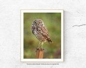 Owl Print, Nature Photography, Farmhouse Decor, White Wall Art, Modern Rustic Decor, Vertical Print, Large Wall Print