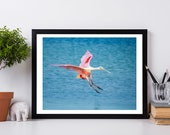 Bird Photography , Roseate Spoonbill Photography, Nature Photography, Bird Photography Wall Print, Bird Photography Prints, Bird Print,