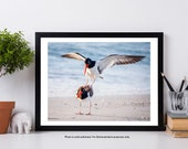 Florida Oyster Catcher, Bird Print, Nature Photography, Bird Photography Print, Florida Art Print, Nature Print